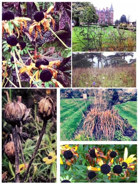 Autumn - appreciating beauty in decay